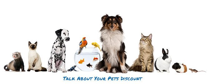 Week of November 27th - Talk About Your Pets